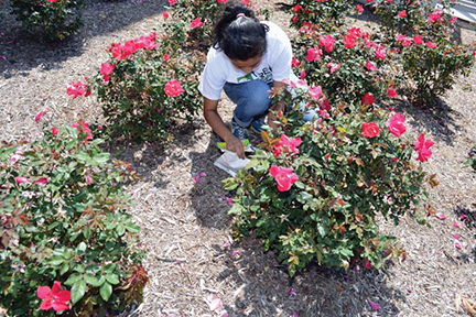 Student launches ladybugs in flower garden